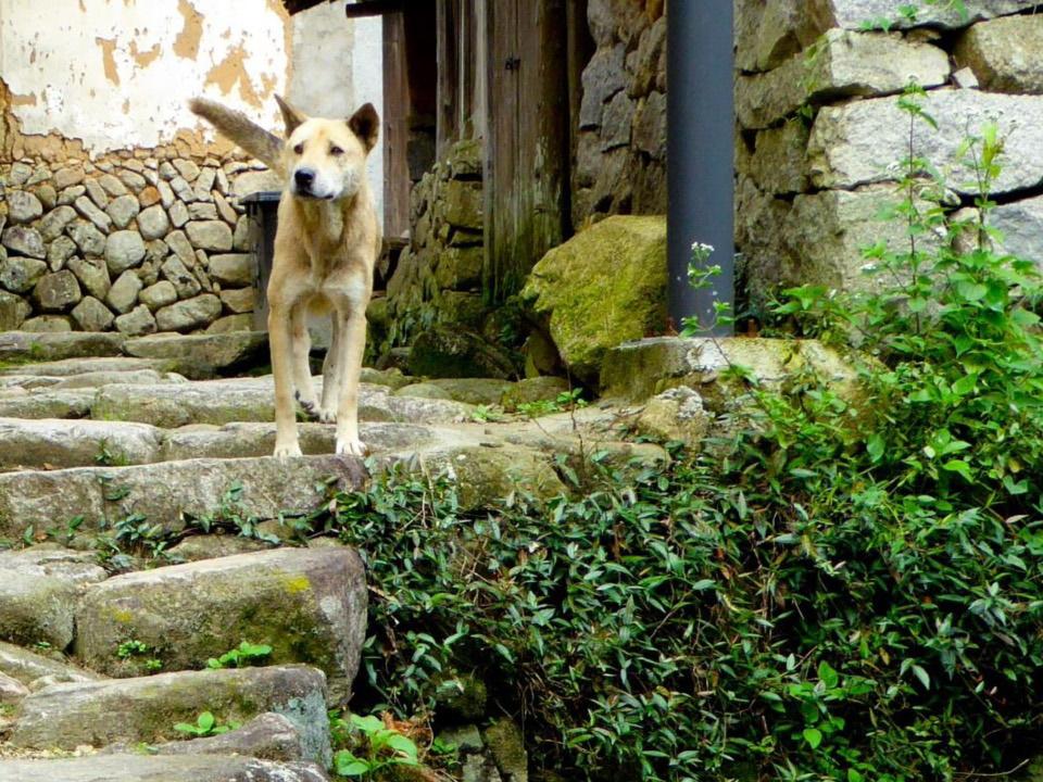Stray Dog Following